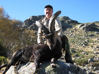 Spanish Gredos Ibex