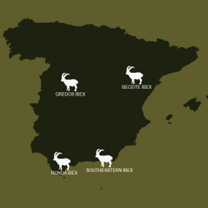 Where Spanish Ibex are in Spain