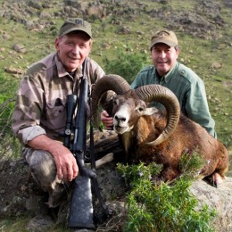 Mouflon sheep trophy