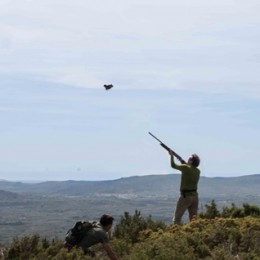 Hunting red legged partridge with Caza Hispanica