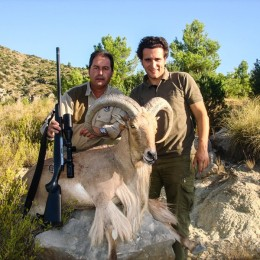 Hunt Aoudad in Spain