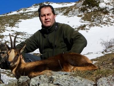 Spanish Chamois: Pyrenean chamois