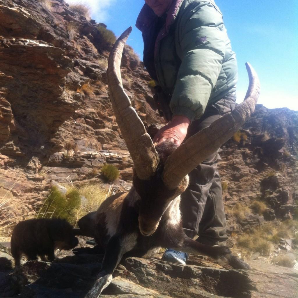 Lance Caskey´s Southeastern Spanish Ibex
