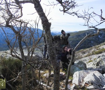 Gredos Ibex hunt in Spain