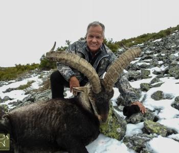 Gredos Ibex hunt in Spain