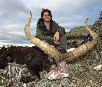 luxurious hunt in Spain