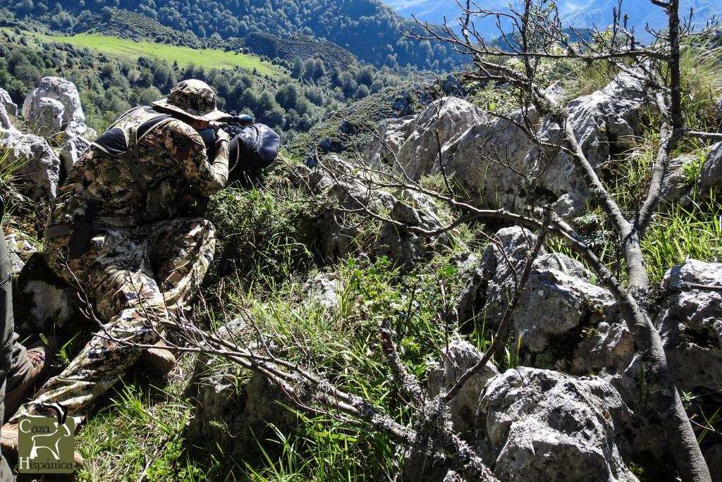 Chamois hunt in Spain